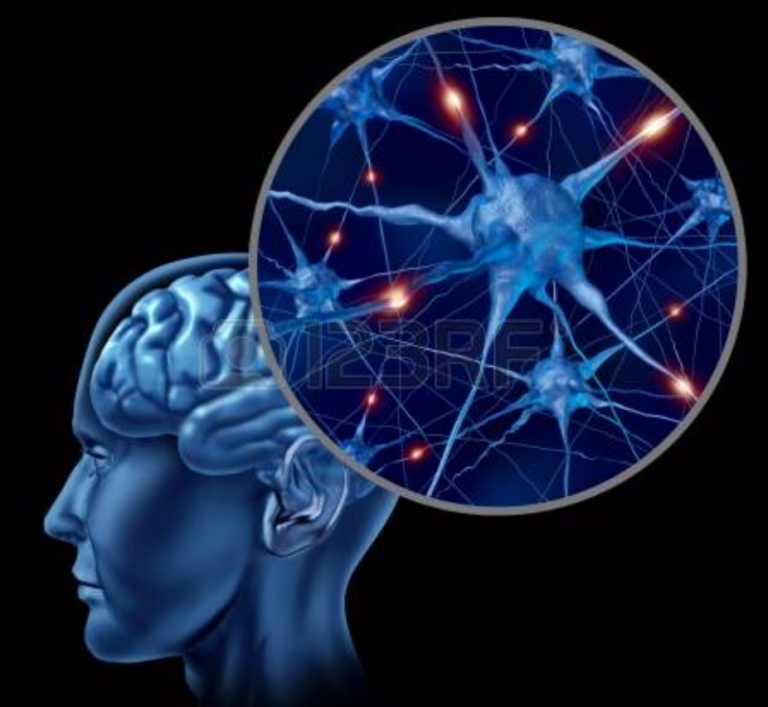 EMPATIA E NEUROSCIENZE